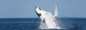 Eden Accommodation - Whale Watching
